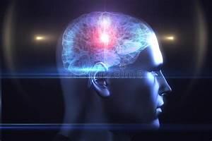 Brain Diagram In Human Head Stock Illustration