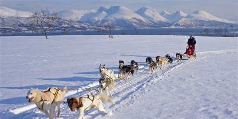 things to do in troms 248 visit