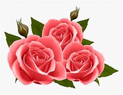Roses Clipart Transparent Kindpng