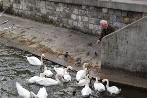 man feeding birds photo