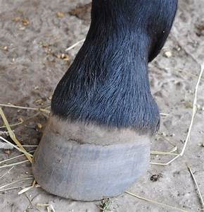 The Horse Hoof  U2013 3