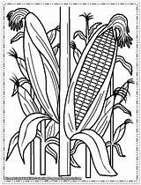Corn Coloring Pages Printable Cornfield Indian Cob Plant Drawing Field Sweet Wheat Stalks Farm Drawings Print Preschool Sheets Food Getdrawings sketch template