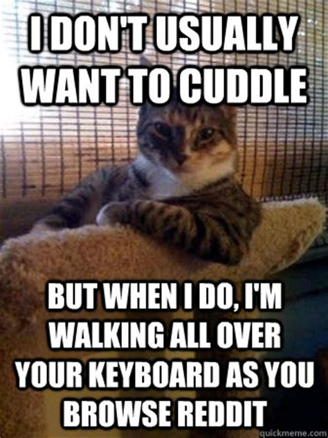 Cuddle Meme - i don t usually want to cuddle but when i do i m walking all over your keyboard as you browse