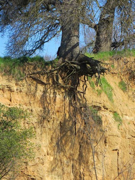 Tree Roots Erosion · Free photo on Pixabay