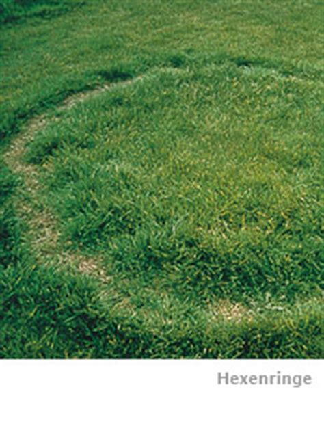 Im Rasen Kreisförmig by Sie M 252 Ssen Hexenringe Im Rasen Bek 228 Mpfen