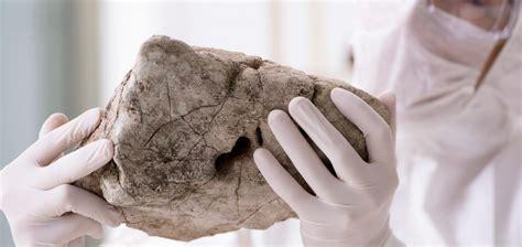 palaeontologe ausbildung beruf mystipendium