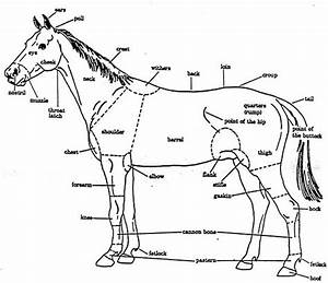 32 Parts Of The Horse Diagram