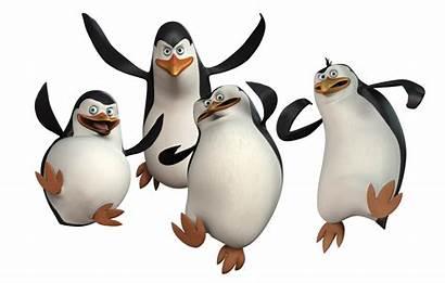 Madagascar Penguins Characters Cartoon Skipper Kowalski Private