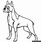 Boxer Dog Coloring Dogs Pages Trace Print Sheets Drawing Outline Colors Clipart Template Thecolor Templates Getdrawings Books sketch template