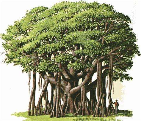 gambar pohon beringin dalam pancasila