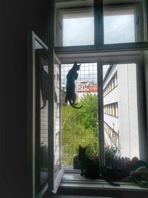 Katzengitter Für Fenster