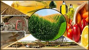 Agro-based industries - Daily Times