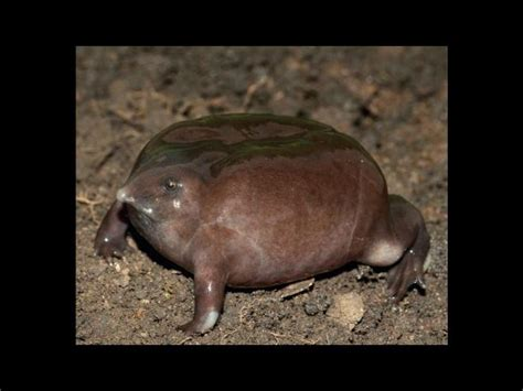 los animales mas feos del mundo imagenes taringa