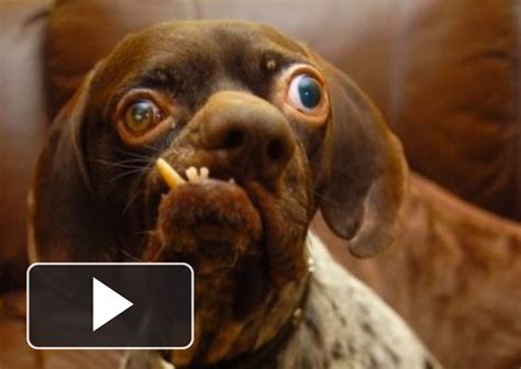 top 5 most ugliest dogs in the world
