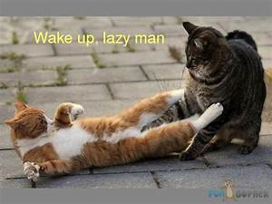 Quotes About Waking Up Cat. QuotesGram  Funny