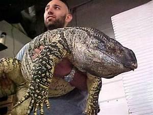 Worlds Biggest Lizard - Reptile - YouTube