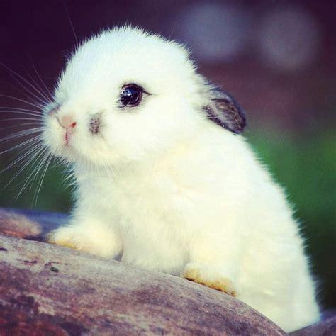 mas de  ideas increibles sobre conejitos en pinterest