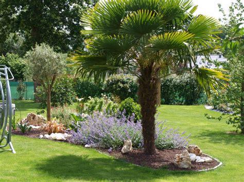massif avec palmier recherche google jardin exotique