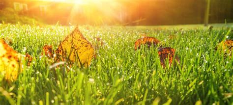 Rasenpflege Im Herbst Vertikutieren by Die Rasenpflege Im Herbst