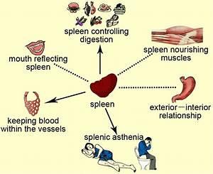 Spleen Function