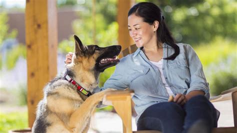 Being a Responsible Dog Owner - Dog Product Picker