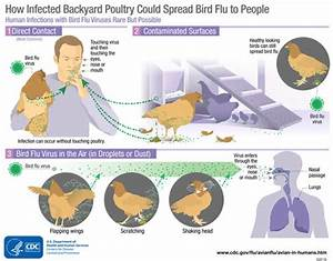 Avian Influenza A Virus Infections In Humans