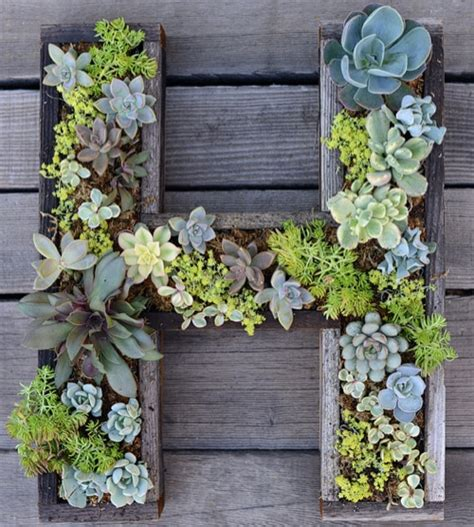 succulent letter how to make wall mounted art with succulent letters homestead survival