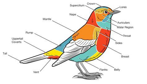 basic parts of a bird bird academy the cornell lab