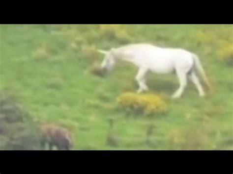 gli unicorni esistono  ecco la prova youtube