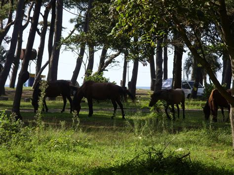 фото лошадки в лесу