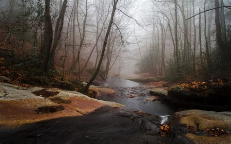 foggy forest creek rocks wallpapers foggy forest creek