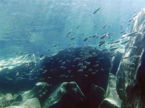 diving lake tahoe  strictly scuba   scuba mood