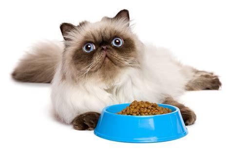 Katze Verweigert Nassfutter