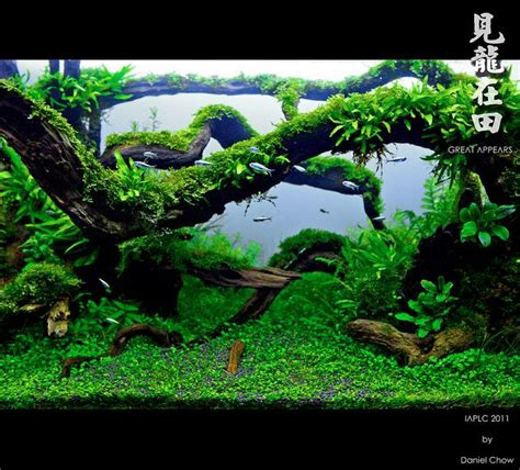 Aquarium Plants Wood  Woodworking Projects & Plans