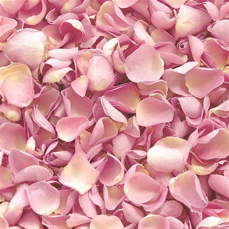 baby bed baby pink freeze dried petals petals roses