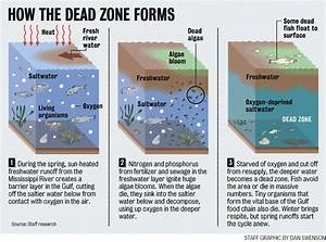 Formation Of The Gulf Of Mexico Dead Zone