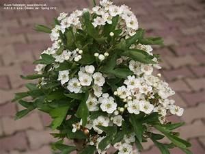 Liečiv rastliny herb