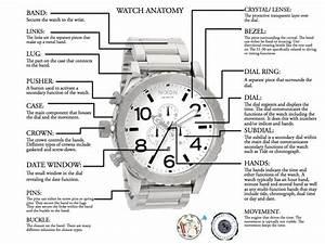Watch Anatomy