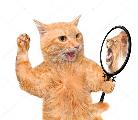 cat orie si e auto cat looking into the mirror and seeing a reflection of a