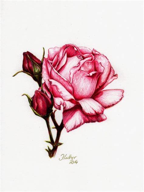 rose buntstift  jana luther rosen zeichnen