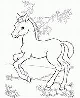 Coloring Horse Fun Printable sketch template