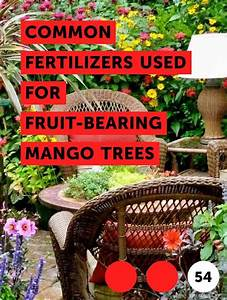 Learn Common Fertilizers Used For Fruit