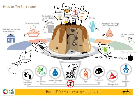 how to get rid of ants in the house how to get rid of ants 7 diy remedies infographic