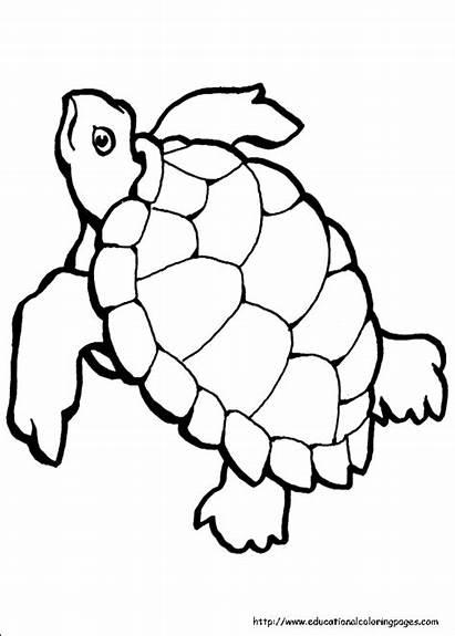Coloring Printable Ocean Pages Turtle Sea Animal