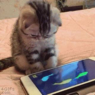 gifs for iphone new trending gif tagged cat cats iphone app trending gifs