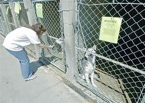 Costa Mesa will stay with O.C. Humane Society's animal ...