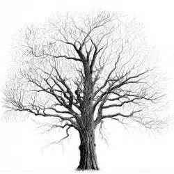 how to draw winter trees