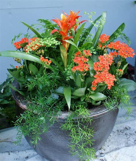 potted plant arrangements 65 best outdoor potted arrangements images on pinterest beach landscape container garden and