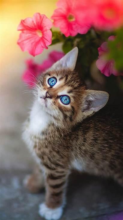 Cute Kitten Eyes Flower 4k Cats Kittens