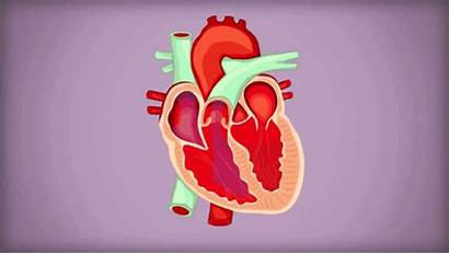 Atrial Fibrillation Afib Stroke Tachycardia Atrium Gifs